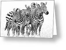 Zebra Quintet Greeting Card