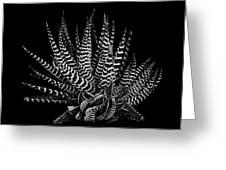 Zebra Succulent Greeting Card