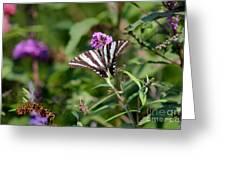 Zebra Swallowtail Butterfly In Garden Greeting Card