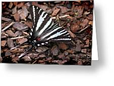 Zebra Swallowtail Butterfly Greeting Card