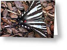 Zebra Swallowtail Butterfly Square Greeting Card