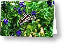 Zebra Swallowtail Greeting Card