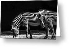 Zebra Unique Patterns Greeting Card