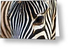 Zebra Vibrations Greeting Card