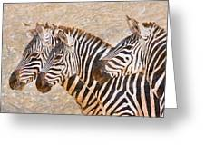 Zebras 5236b Greeting Card