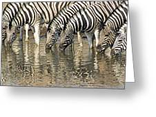 Zebras At Water Hole Greeting Card