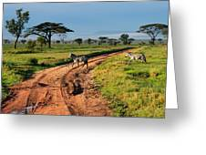 Zebras Cross The Road Greeting Card