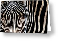 Zebras Face To Face Greeting Card