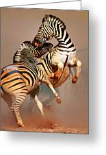 Zebras Fighting Greeting Card