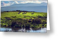 Zebras On Green Grassy Hill. Ngorongoro. Tanzania Greeting Card