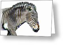 Zephyrus Zebra IIi Greeting Card