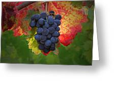 Zinfandel Grapes Greeting Card