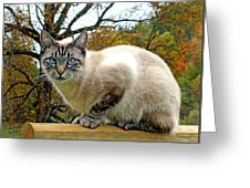 Zing The Cat In The Fall Greeting Card