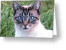 Zing The Cat Looking At Us Greeting Card