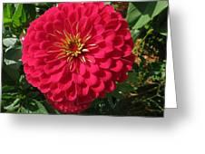 Zinna Greeting Card