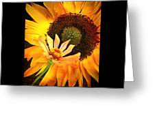 Zinnia And Sunflower Greeting Card