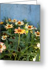 Zinnia Greeting Card by Denice Breaux