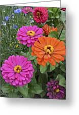 Zinnia Garden Greeting Card