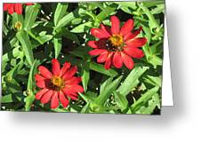 Zinnia Gardens-1 Greeting Card