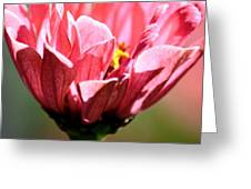 Zinnia Macro Greeting Card