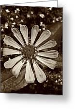 Zinnia Monochrome Greeting Card