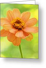 Zinnia On A Brilliant Spring Day Greeting Card