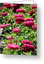 Zinnia Palooza Greeting Card
