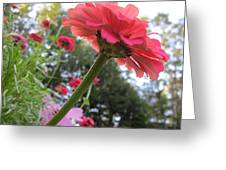 Zinnia Side View Greeting Card