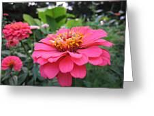 Zinnias Greeting Card
