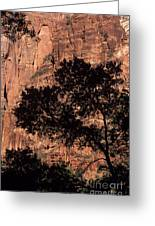 Zion National Park Canyon Walls With Silhouetted Trees In Front  Greeting Card