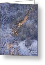 Zion's National Park Reflection Greeting Card