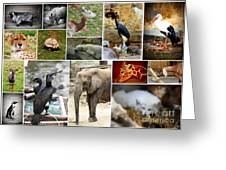 Zoo Collage Greeting Card