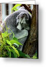 Zoo Life 2011.no.3  Greeting Card