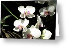 Zoo Orchid Greeting Card