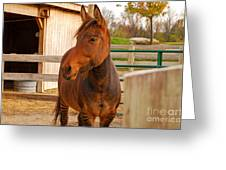 Zorse Greeting Card