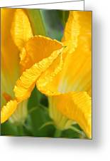 Zucchini Flowers In May Greeting Card