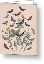 Zygaenidae - Syntomidae Greeting Card