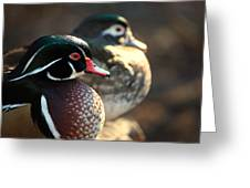 A Couple Of Wood Ducks Greeting Card