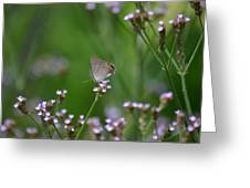 A Little Flower And Little Butterfly Greeting Card