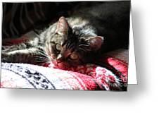 Angel Cat Greeting Card