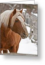 Belgian Horse Lord Greeting Card
