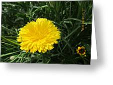 Buttery Single Yellow Flower Greeting Card