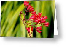 Coral Bells Blooming Greeting Card