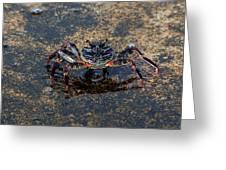 Crab And Reflection Greeting Card