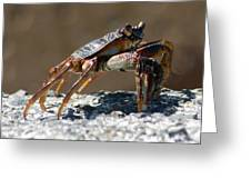 Crab On Rock Greeting Card