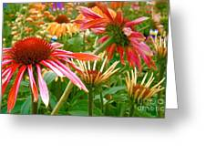 Field Of Flowers 2 Greeting Card