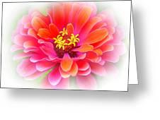 Flower On White Greeting Card