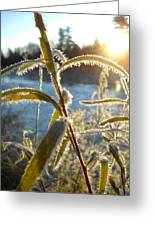 Frost On Willow At Sunrise Greeting Card