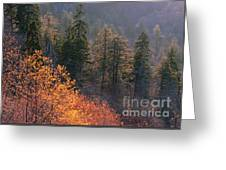 Great Smoky Mountains Morning Greeting Card