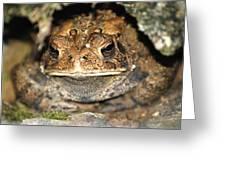Grumpy Toad Greeting Card